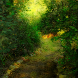 Fairy Path by Christy  Hidalgo - Landscapes Forests ( nature, green, path, light, walk )