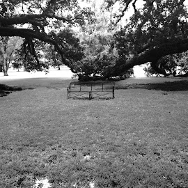 Lonely Bench by Brenden Jiles - Novices Only Objects & Still Life