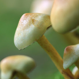 Shroomcity by Nico Carbajales - Nature Up Close Mushrooms & Fungi