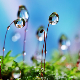 by Fentee  Affandy - Nature Up Close Natural Waterdrops ( waterdrops macrophotography )