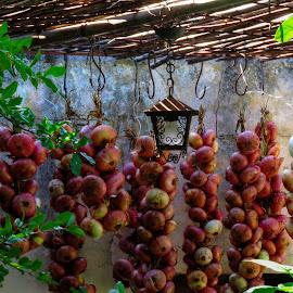 Onions, Red & Yellow by Bojan Bilas - Food & Drink Fruits & Vegetables ( onions, red, vegetables, yellow,  )