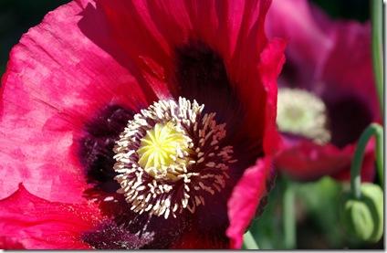 Poppy 2 5 24 08