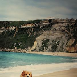 Baywatch Dog by Sorina Lavinia Bodéa - Animals - Dogs Running ( amazing, mountain, beautiful, artistic, nazare, ocean, beach, atlantic, portugal, dog, running,  )