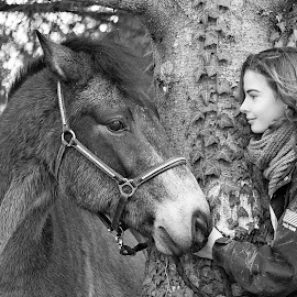 Relationship by Claire Rossignol - Animals Horses ( horses, horse,  )