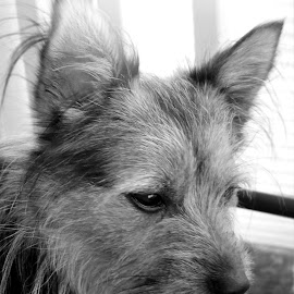 Puppy Love by Jen Lutar - Animals - Dogs Portraits ( up close, blackandwhite, animals, dogs, friends, animalportrait, pets )