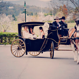 Arriving at Ceremony by Alan Evans - Wedding Ceremony ( bridesmaids, wedding photography, wedding day, wedding, horse, aj photography, horse carriage, hunter valley, bride )