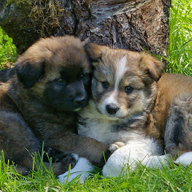 Please stay with me. by Todd Bellamy - Animals - Dogs Puppies