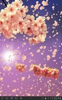 Screenshot of Sakura Free Live Wallpaper