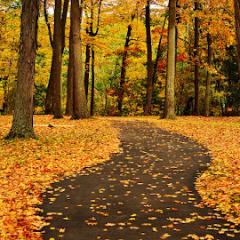 Fall by Kourtney Monroe - Landscapes Forests ( fall, color, colorful, nature )