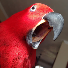 Yawn by Angie Arnold - Instagram & Mobile iPhone ( bird, animal parrot,  )