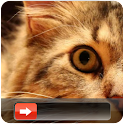Cute Cat Go Locker icon