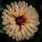 20140624-Nikon_14_050.jpg