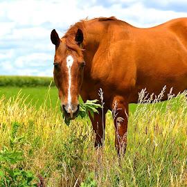 by Sandy Terry-Jones - Animals Horses