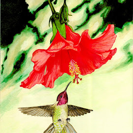 Down Under by Lew Davis - Painting All Painting ( watercolor, animals, hummingbird, lew davis, birds, hummingbirds, watercolor painting, bird, hibiscus, red  flower, red, nature, red flowers, hummers, red hibiscus, paintings, garden, painting, flower, animal, hummer )