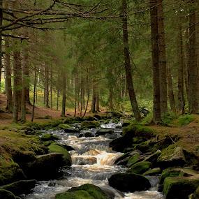 Hammerbach Cz by Michal Valenta - Landscapes Forests (  )