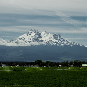 MT. Shasta and Irrigated fields by Scott Morgan - Landscapes Mountains & Hills ( sprinklers, field, volcano, mt. shasta, fields, wheel lines,  )