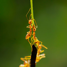 menuju puncak by Firmansyah Goma - Animals Insects & Spiders (  )