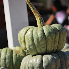 Green Pumpkins at the Market by Jane Rodrigues - Nature Up Close Gardens & Produce ( for sale, market, food, pumpkins, eat, decorations, thanksgiving, small, green pumpkins, halloween,  )