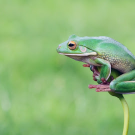 when I see you by Kurito Afsheen - Animals Amphibians