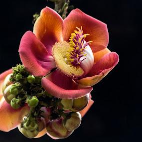 by Neelakantan Iyer - Flowers Flowers in the Wild