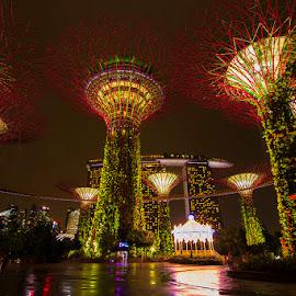 Garden by the Bay by Heppi Wasyeri - City,  Street & Park  City Parks ( garden, singapore )