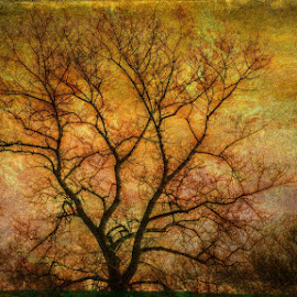 The tree at sunset behind by Dunja Dretvić - Digital Art Places ( nature sunset orange silhouette black rest autumn countryside light weather outdoor sunlight tree dark sun sunrise nice scene landscape wood artistic bright wild background sky )