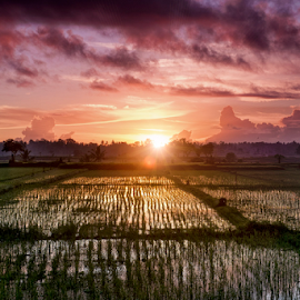 Rice Fields by Ferdinand Ludo - Landscapes Prairies, Meadows & Fields ( bali, indonesia, province, sunrise, rice fields )