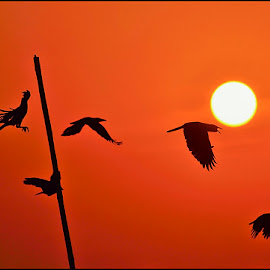 Symmetry in Asymmetry  by Yogesh Waikul - Landscapes Sunsets & Sunrises