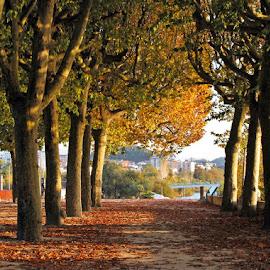 Cores de Outono by Ana Batista Constantino - City,  Street & Park  City Parks ( outono, parque )