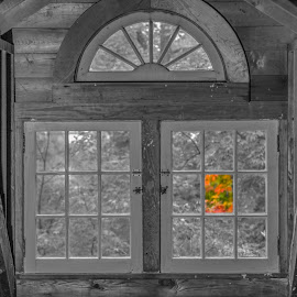 by Michael Wolfe - Buildings & Architecture Other Interior ( pwc, selective colour, selective color, window, still life, trees, windows, architecture )