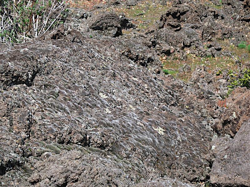 Muschi sulla lava