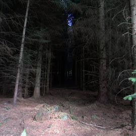 Enter the forest by Martin Thomson - Landscapes Forests ( floor, forest, pitlochry, dense, craigower,  )
