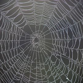 Welcome to my web! by Rhonda Mullen - Nature Up Close Webs