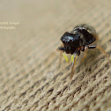 Unknown Jumping Spider