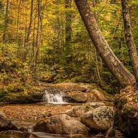 by Stephen  Barker - Landscapes Forests