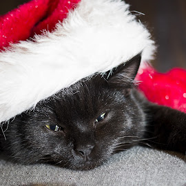 Christmas rest by Kjersti Narmo - Animals - Cats Kittens ( red, santa, christmas, sleepy, black,  )