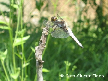 dragon-fly-away-01