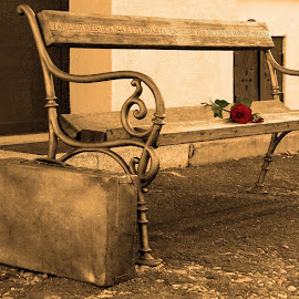 by Hedvika Gumilar - Artistic Objects Furniture ( public, bench, furniture, object )