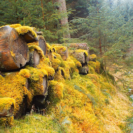 forest trail by Liz Symons - Novices Only Flowers & Plants ( logs, trail, moss, trees, forest,  )
