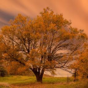The big tree by Ivan Bertusi - Nature Up Close Trees & Bushes ( red, tree, big, sera, evening, light )