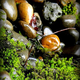 Mossy rocks by Liz Hahn - Nature Up Close Rock & Stone