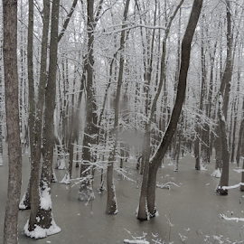 Arkansas Swamp  by Elizabeth L-Crall - Landscapes Weather ( natural light, snow storm 2015, trees, scenic, frozen water, landscape, natural, rural, country )
