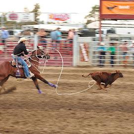 Cowboy 0 - Calf 1 by Dennis McClintock - Sports & Fitness Rodeo/Bull Riding ( cowboy, bend oregon, redeo, calf roping, fair )