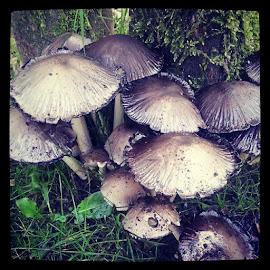 Mushrooms by Alyne De Rudder - Instagram & Mobile Android