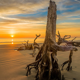 Sunrise at Driftwood Beach by Jason Rambo - Landscapes Sunsets & Sunrises ( georgia, jekyll island, beach, sunrise )