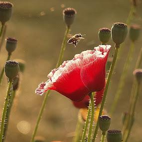 by Nani Garu - Flowers Flowers in the Wild