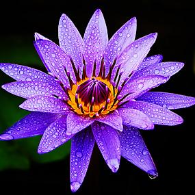 by Dmitri Molido - Flowers Single Flower (  )