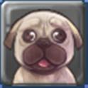 애견 정보 icon