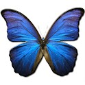 Butterfly Glossary icon