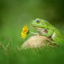 Waiting for you by Dede TBS - Animals Amphibians ( macro, nature, frog, amphibian, nature up close, animal )